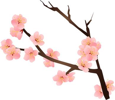 李子樹/類型f / uta