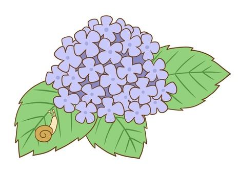 Blue Hydrangea and Snail