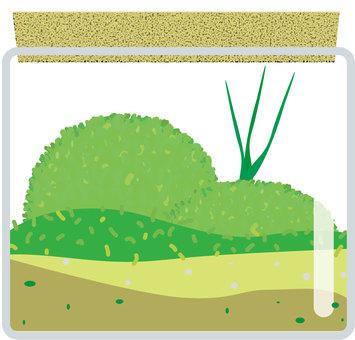 Moss ball · Moss Terrarium