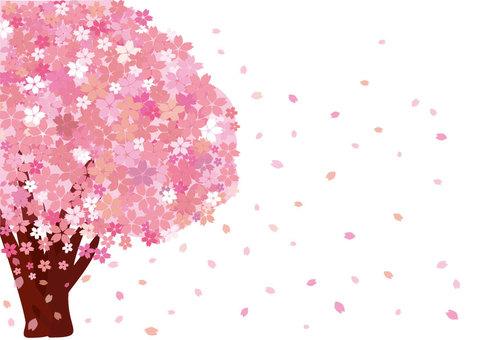 Sakura (wallpaper / background plain color)