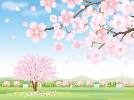벚꽃의 풍경 백
