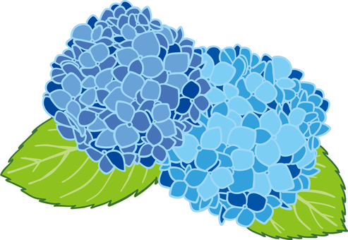 Hydrangea illustration background transparent