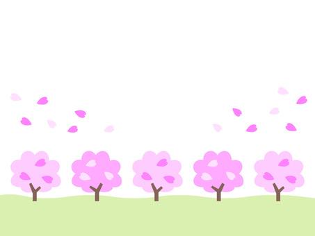 Sakura Namiki A