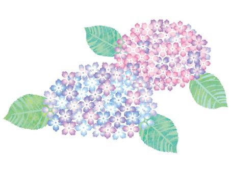 花あじさい梅雨6月紫陽花アジサイ植物初夏