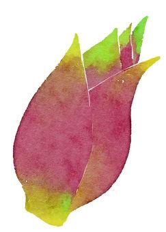 Watercolor ingredients series Myuga