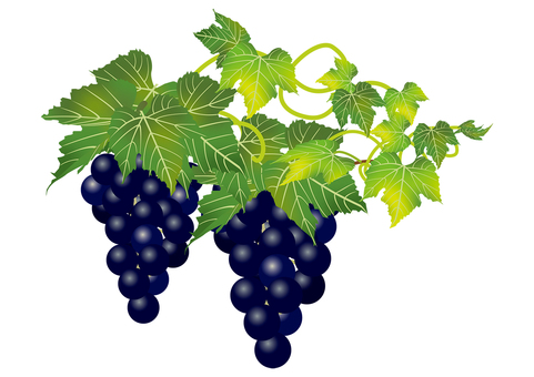 Delicious grape 16