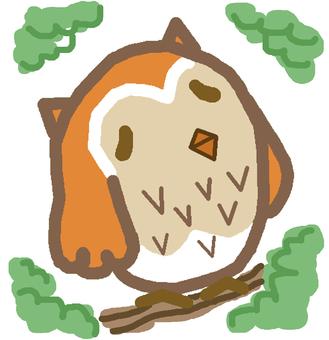 Owl ②
