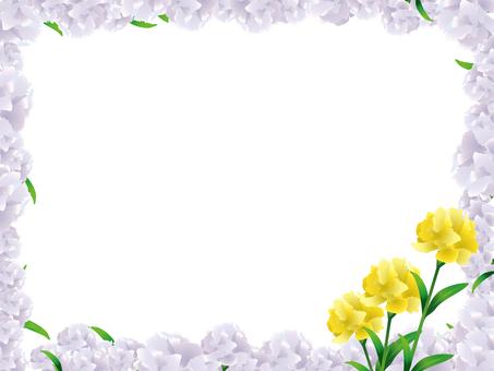 康乃馨11