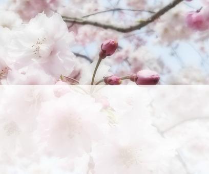 Flower message card 7-B