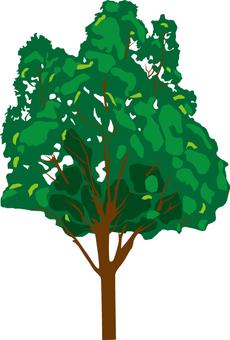 Planting 1