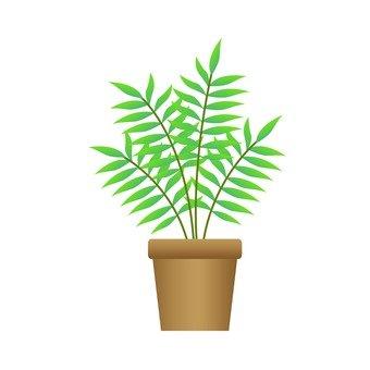 Houseplant - table palm