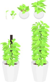 How to grow pots