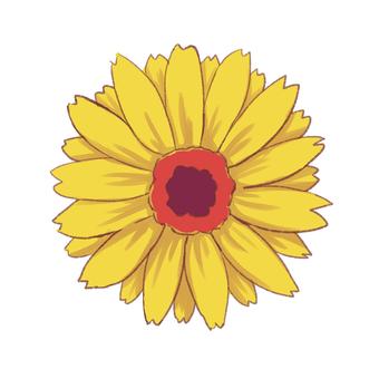 Gerbera yellow