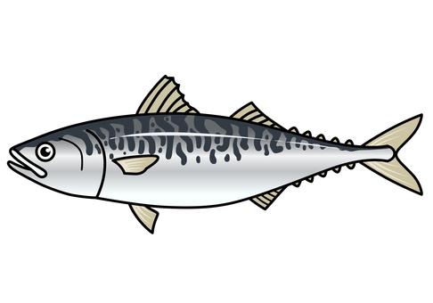 Fish illustration-mackerel