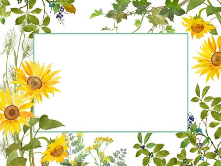 Summer / sunflower illustration