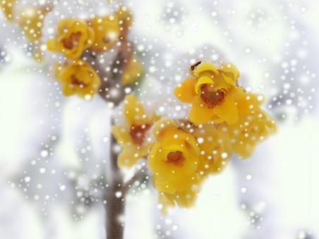 Snow and Rowbai