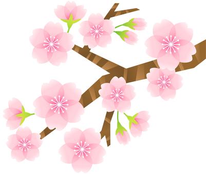 Cherry blossom material 09