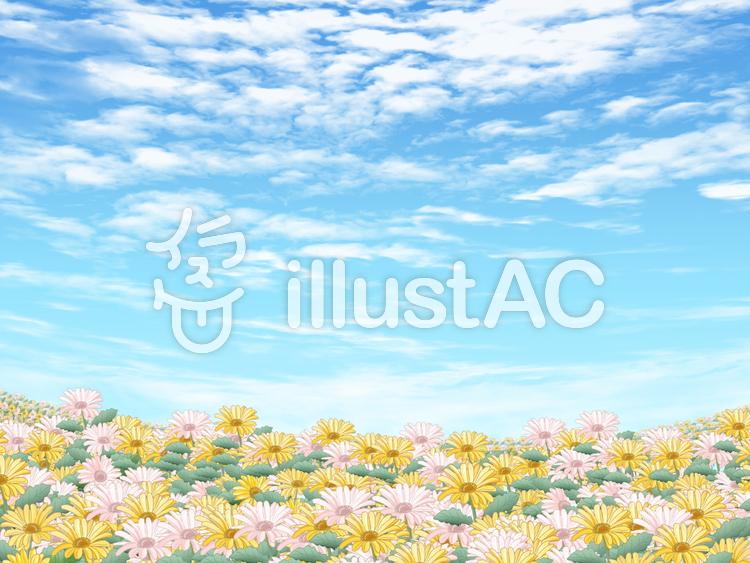 ガーベラの花畑のイラスト