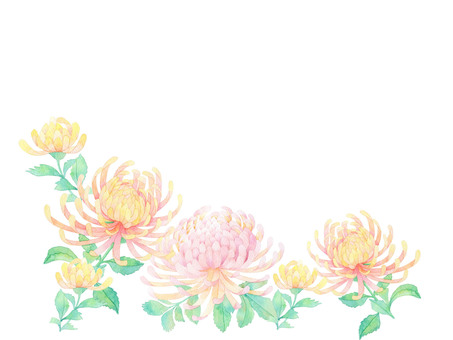 Chrysanthemum ★ 0342-F