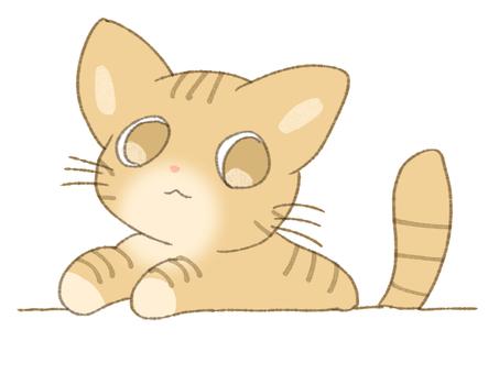 Tea tiger cat run out