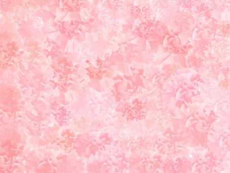 Carnation ver 05