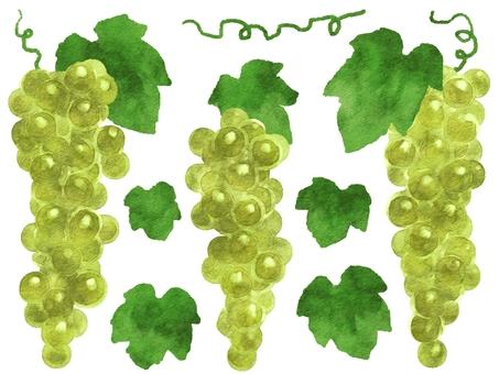 Watercolor style grape 3