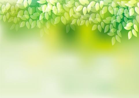 新鮮綠色17