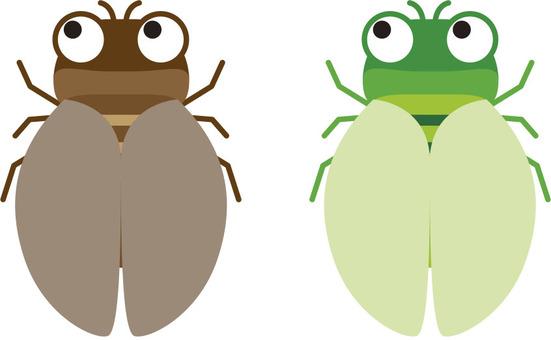 Semi, cicada