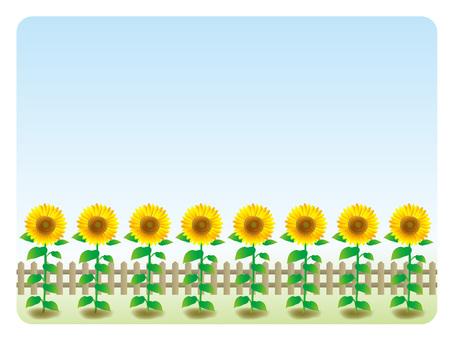 Background frame (24) Sunflower field in the garden