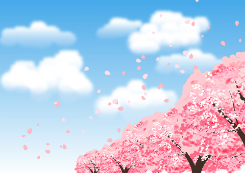 Cherry blossom trees and blue sky background