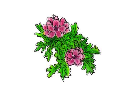 Centered geranium