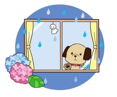 【Rainy season】 Dog waiting for the rainy season