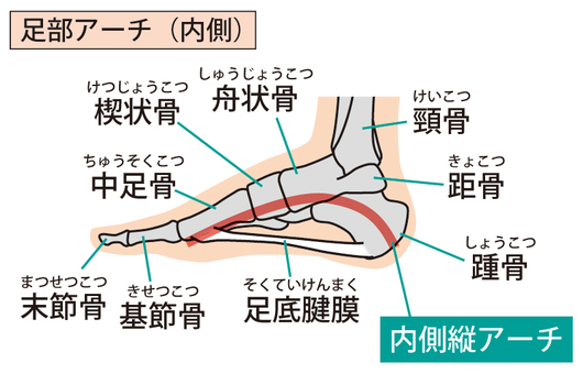 Foot arch (inside)