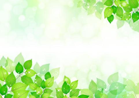 Fresh green 272