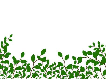 新鮮的綠色框架