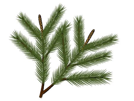 Pine sauce