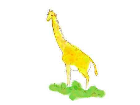 Giraffe of the grassland