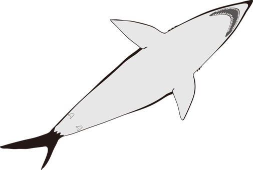 Shark (from below)