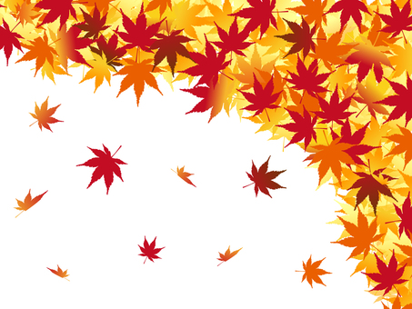 Japanese style material Autumn leaves Maple leaves