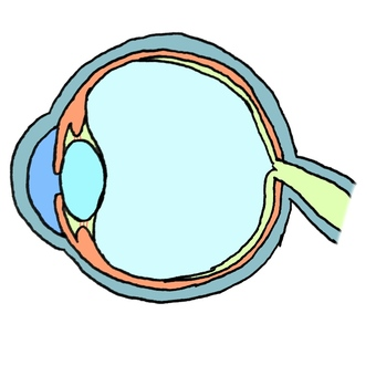 Eye structure