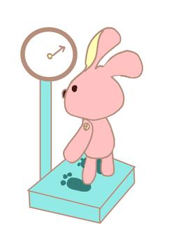 Body rabbit