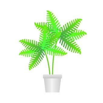 관엽 식물 - 고사리