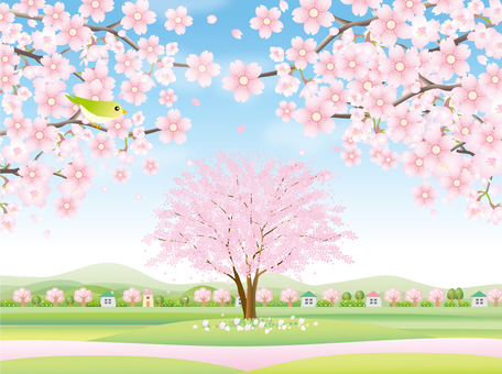 Spring landscape with cherry blossoms in full bloom