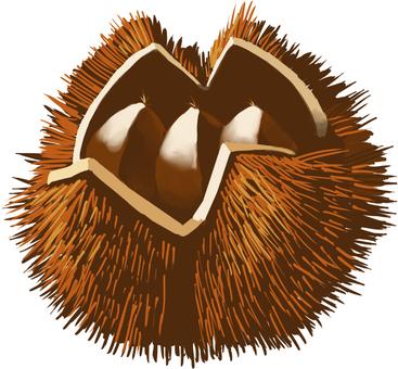 Chestnut chestnut
