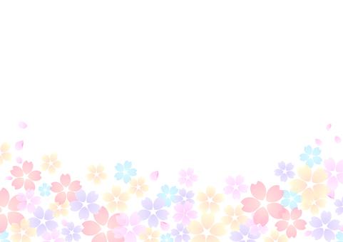Cherry blossoms 51