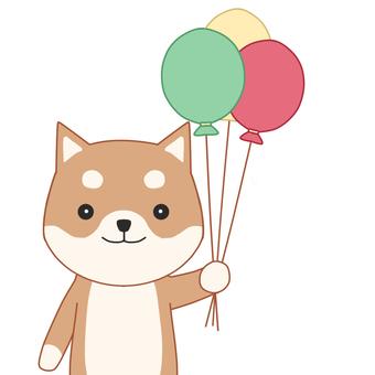 Shiba Inu and balloons