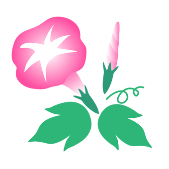 Pink morning glory illustration