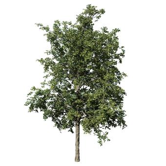 리얼한 나무 (CG) _002