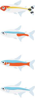 Tropical fish Cardinal tetra etc