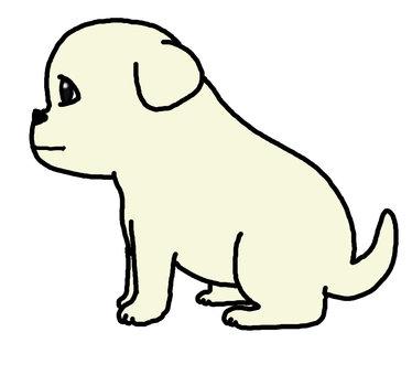 Labrador puppy 1100 x 1000